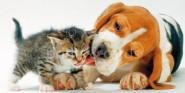 XL-Postkarte Hund & Katze