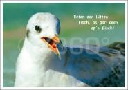 Postkarte Möwe Beter een...