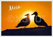 Postkarte Möwen Moin
