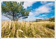 Postkarte Dünenlandschaft