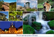 Postkarte Naturparadies Harz