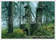 Postkarte Nationalpark Harz Wald