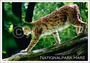 Postkarte Nationalpark Harz Lux