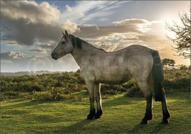 3D-Postkarte Pferd