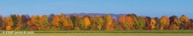 Panoramapostkarte Baumreihe