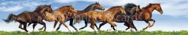 Panoramapostkarte Galoppierende Pferde