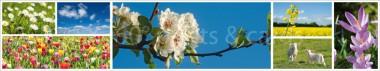 Panoramapostkarte Frühling Impressionen