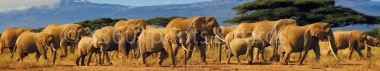 Panoramapostkarte Elefanten