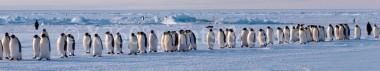 Panoramapostkarte Pinguine
