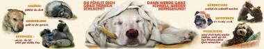 Panoramapostkarte Tierisch krank