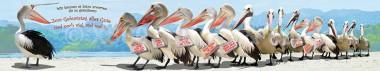 Panoramapostkarte Pelikane