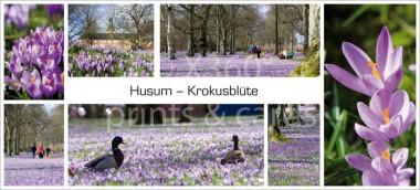 XL-Postkarte Husum Krokusse