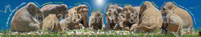 Panoramapostkarte Elefantenrunde